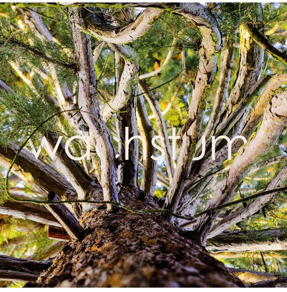 wachstum-baum-natur